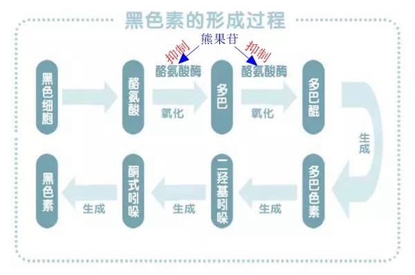 α-熊果苷与β-熊果苷的区别