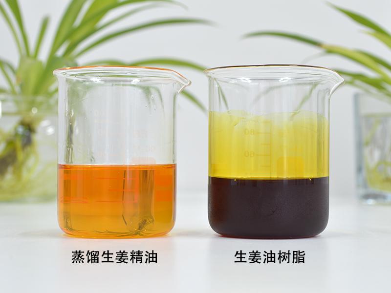 蒸馏生姜精油和生姜油树脂